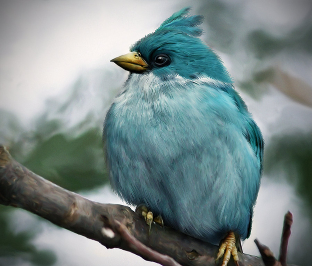 blue-angry-bird